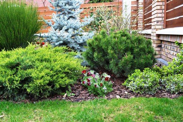 Aranjamentul contine: brad argintiu, pin pitic, ienupar, evonimus si plante perene